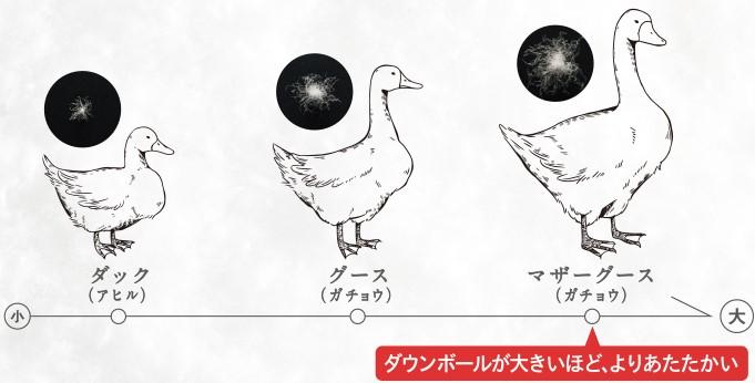 ダック・グース・マザーグースのダウンボールの大きさ比較